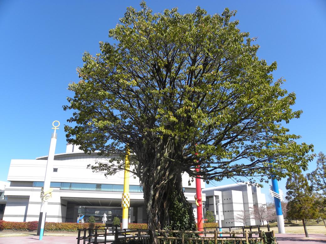 アコウの木のイメージ