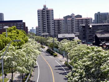 5月7日の西側道路の写真